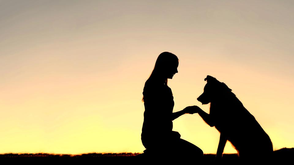 Silhouette of Young Woman and Pet Dog Shaking Hands
