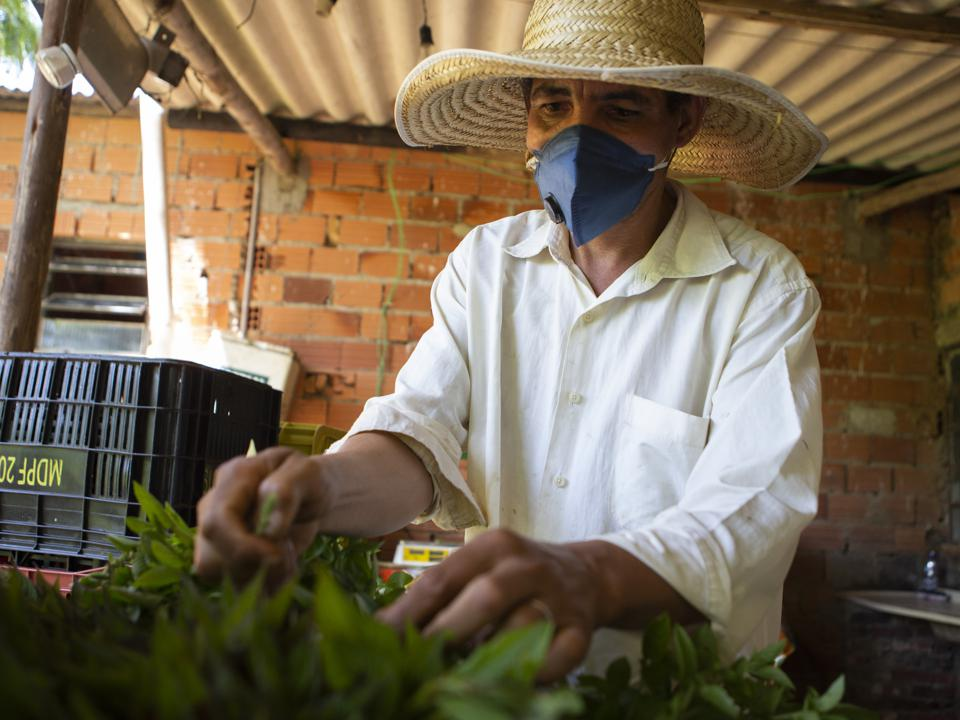 Daily Life of Organic Producers Who Provide Farm to Table Products During the Coronavirus (COVID -19) Pandemic