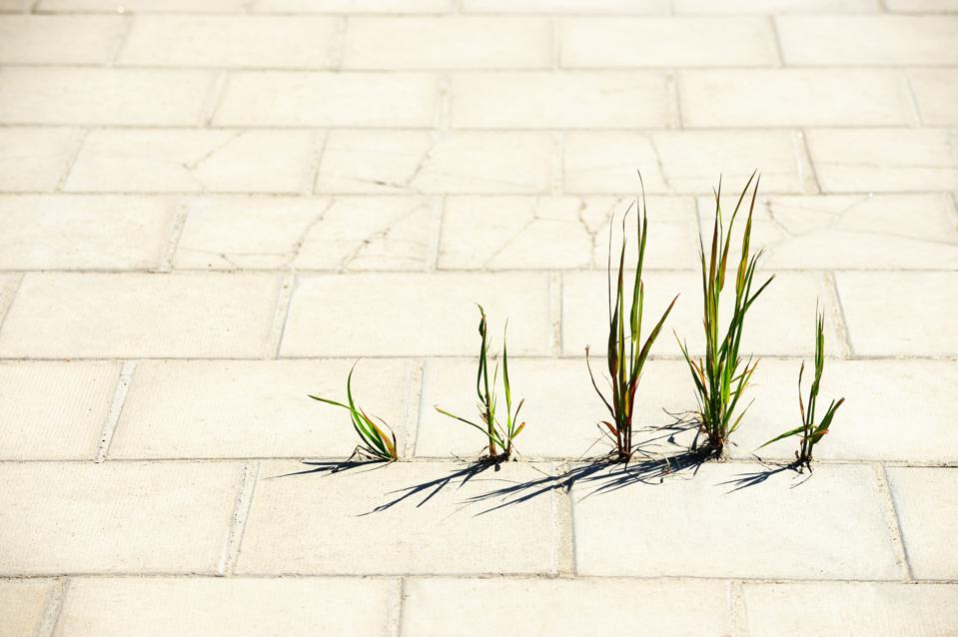 Weed breaks through tiled concrete