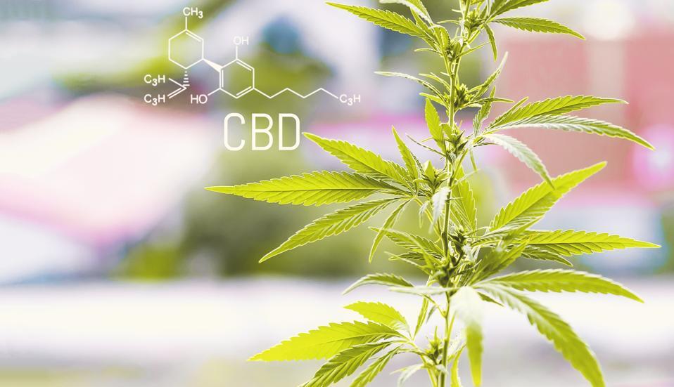 Structural model of cbd molecule. Cannabis marijuana with the image of the chemical formula CBD cannabidiol
