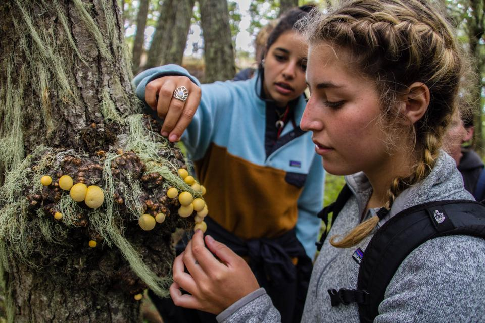 Two Gap Year students studying tree species.