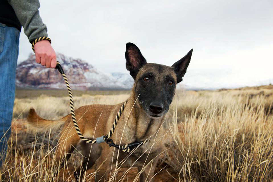 Dog on leash in mountains.