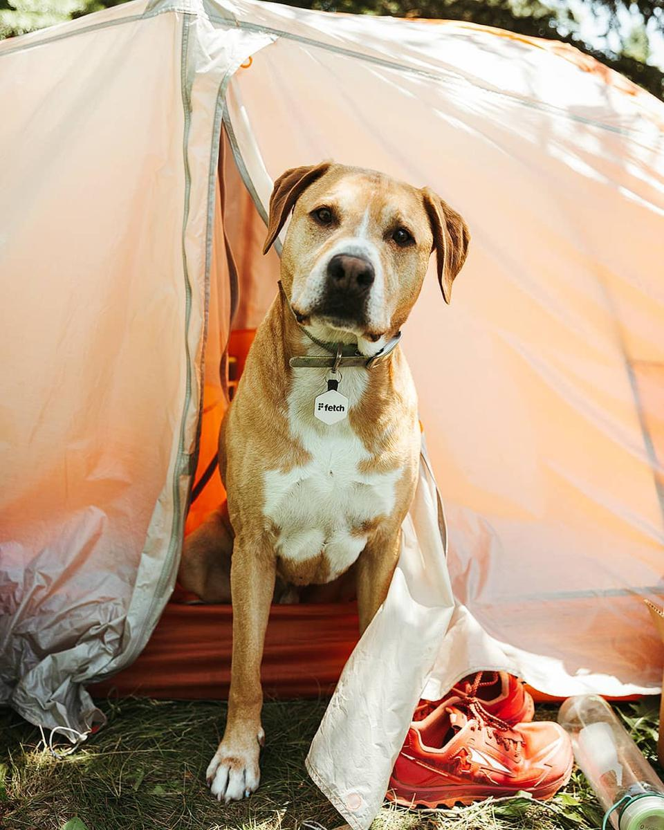 Camping dog with tent.