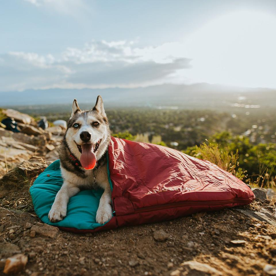 Dog in sleeping bag.