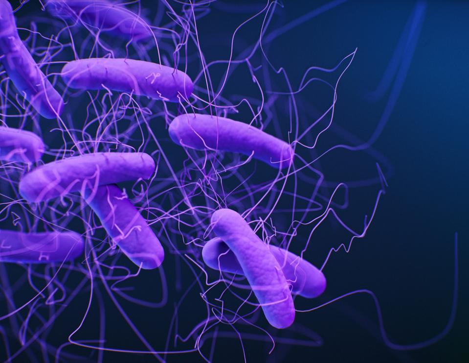 Clostridioides difficile bacteria, illustration