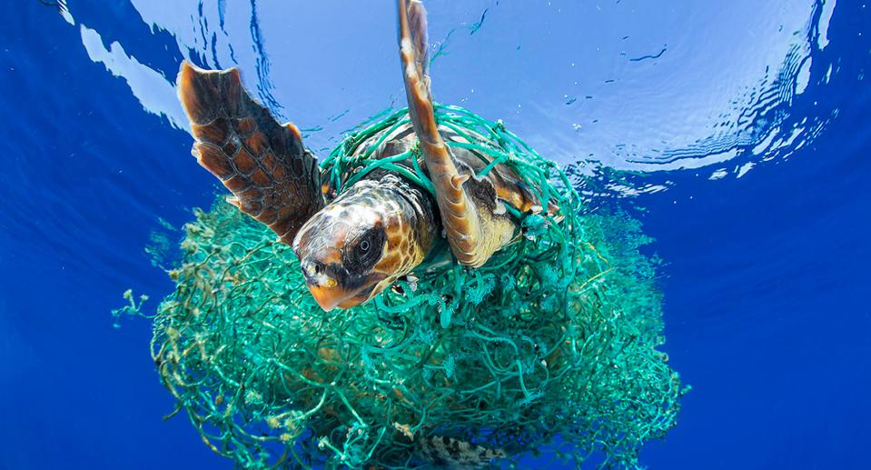 A surface level clean up on its own would miss under the surface pollution like ghost nets