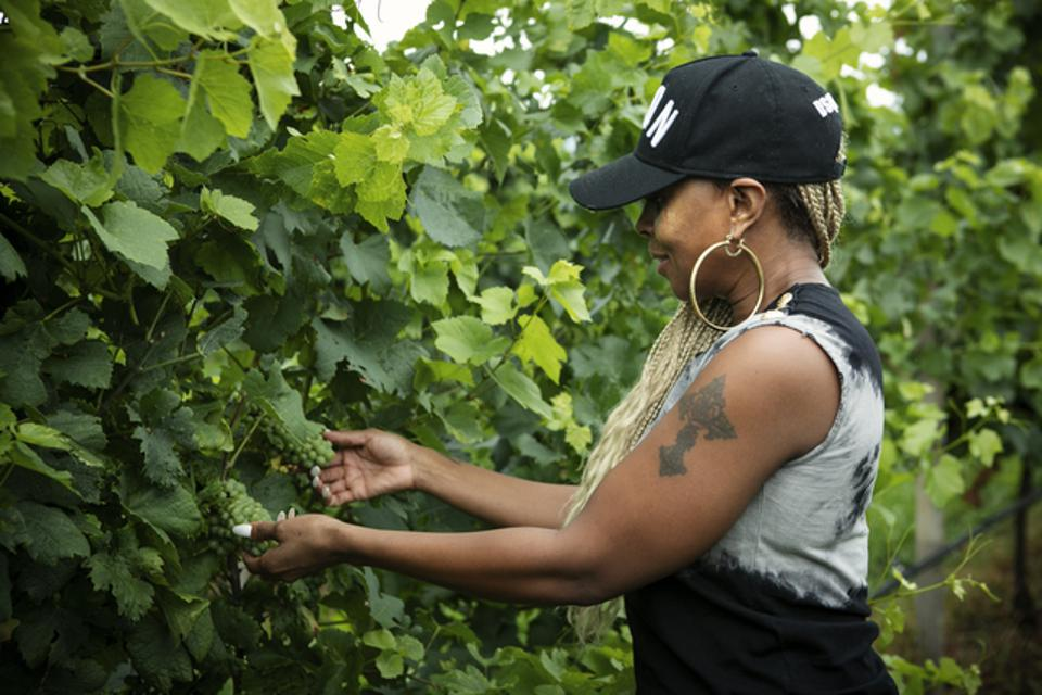 Mary J. Blige admiring the grapes of Fantinel WInery.