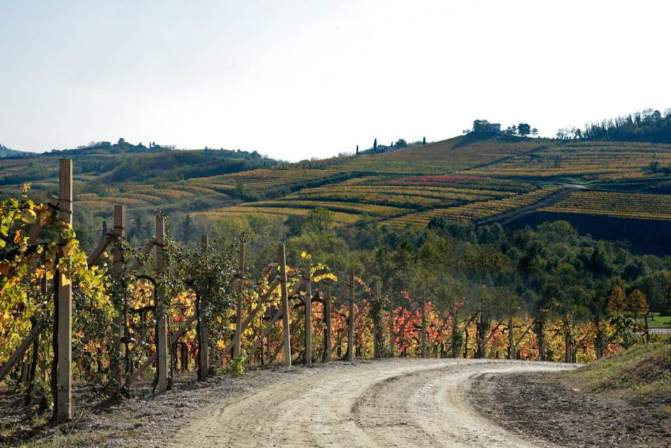 The rolling vineyards and hills of Fantinel Winery in Friuli.