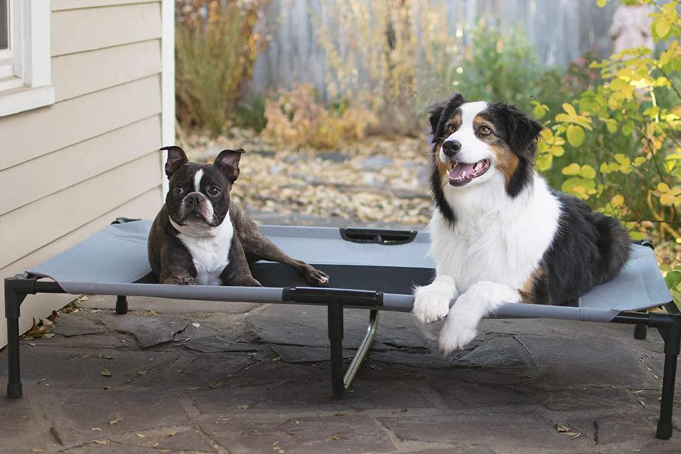 two dogs on an elevated cot bed