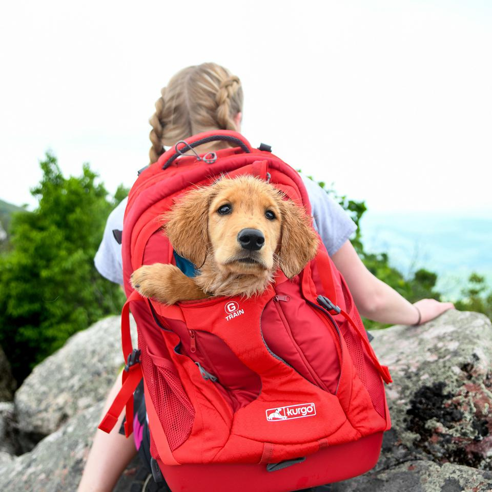 Backpack for carrying dog