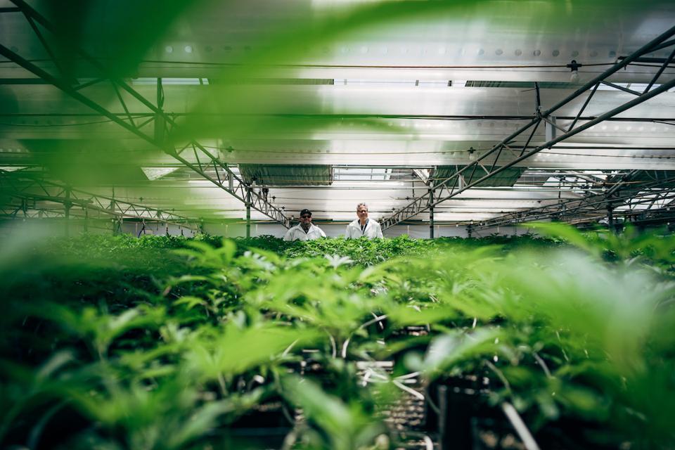 Andrew DeAngelo, Harborside, CBD Nation, cannabis documentaries, medical cannabis, CBD