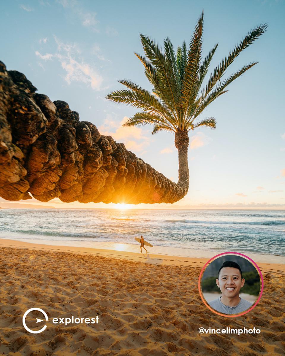 Explorest travel app photography tropical ocean surfer palm tree