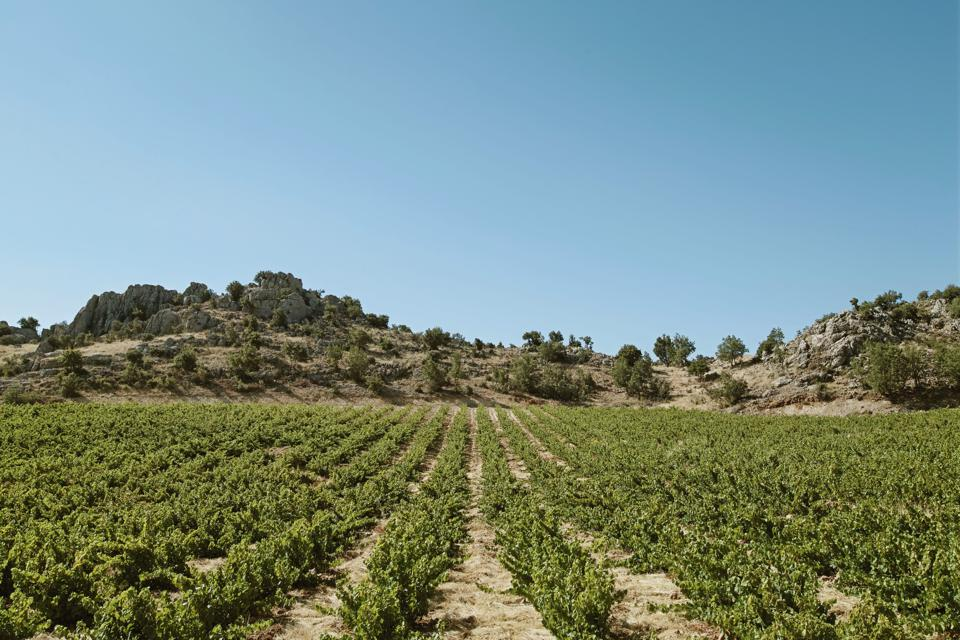 Halwa vineyard in Lebanon