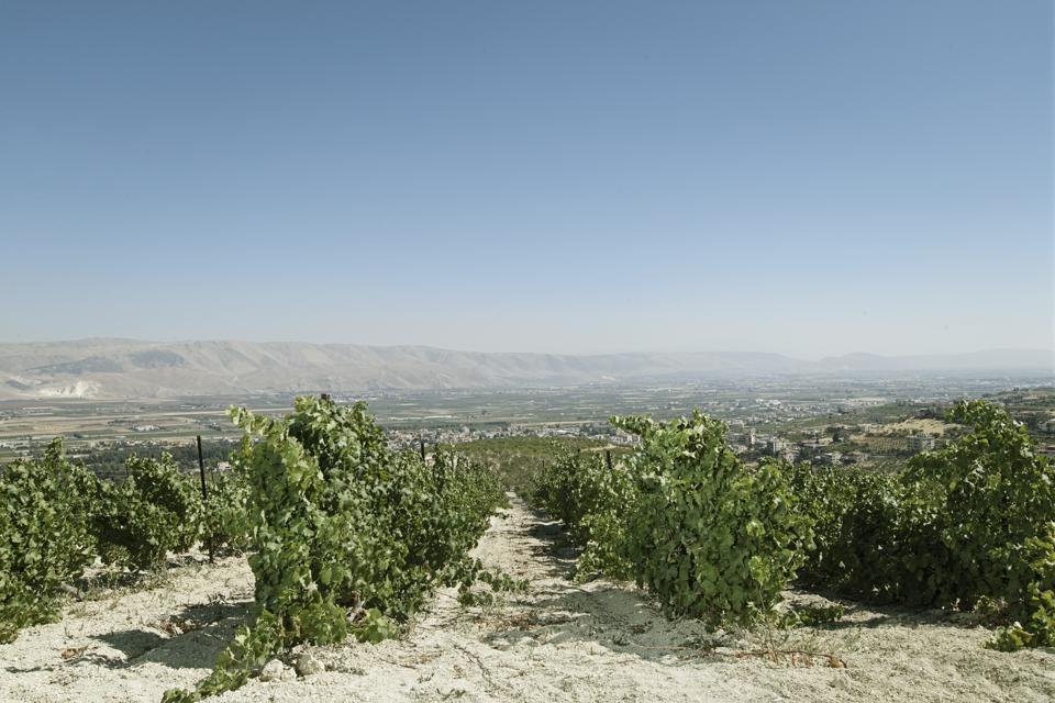 Niha vineyard, Lebanon