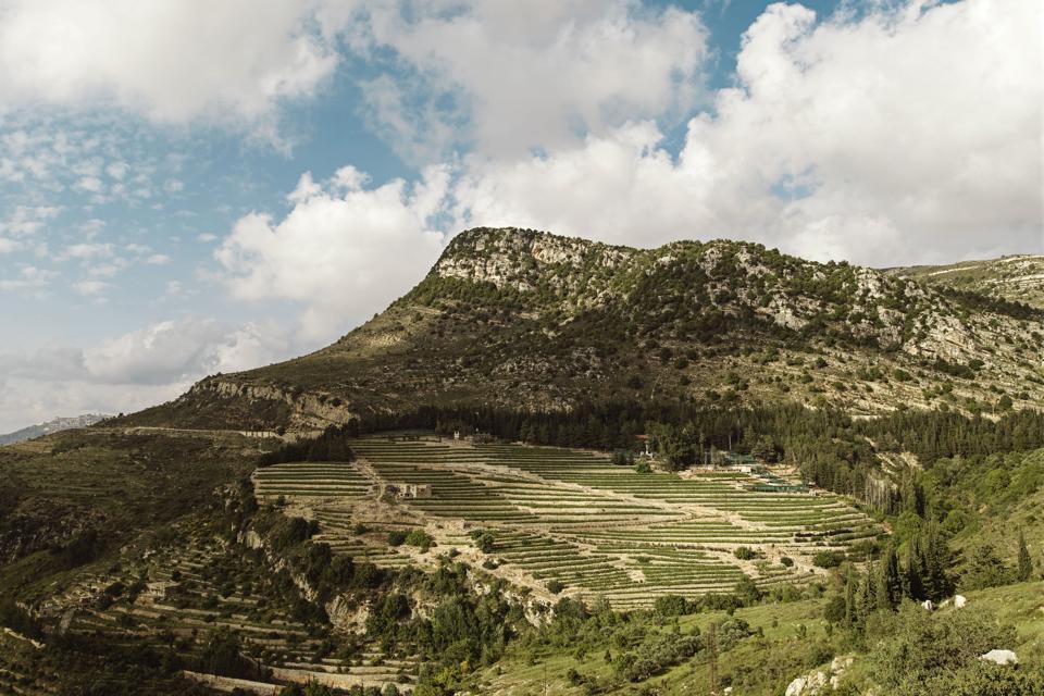 IXSIR Jezzine vineyard, Lebanon