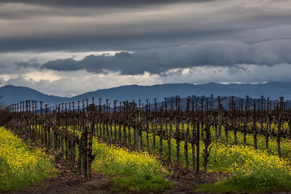 Winter in California's Wine Country