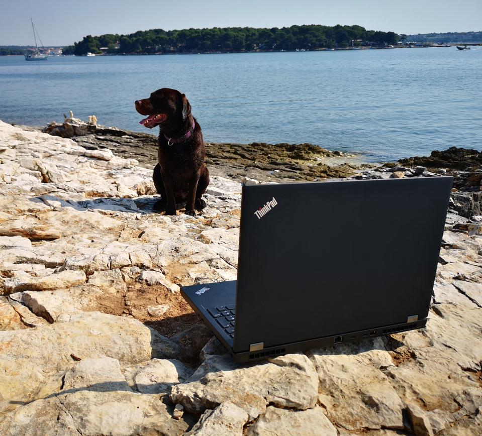 My dog Slayer, looking for the ThinkPad P53's competition...