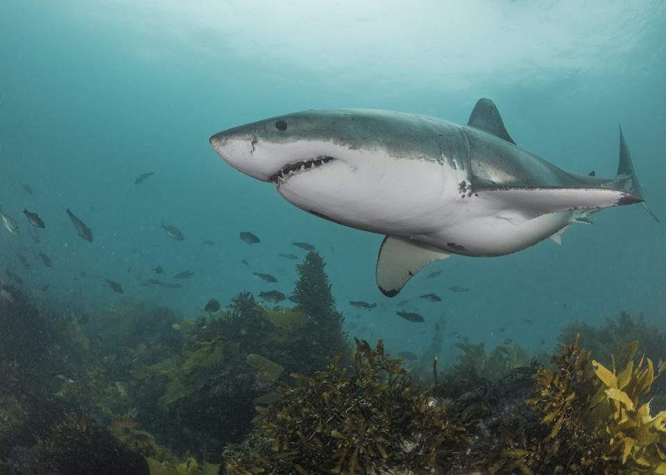 Shark Week, The Discovery Channel. This year includes A-list stars such as Mike Tyson, Will Smith, Shaquille O'Neal, Snoop Dogg, Sharks, finning, pandemic, Covid-19, shark finning, oceans, species