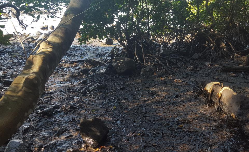Mauritius mangrove forests were drenched in heavy ship oil, causing direct damage and will eventually lead to toxic chemicals being absorbed by the mangrove's roots.  This sort of damage is called 'tar balls.'