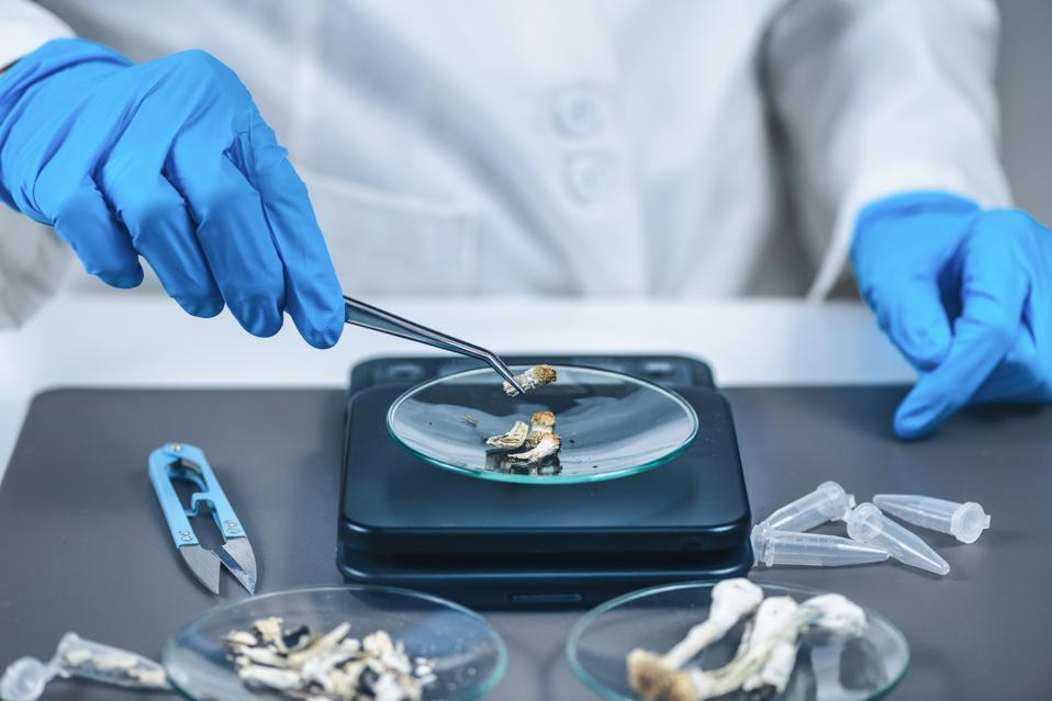 Measuring Psilocybin Magic Mushroom Micro Doses in Laboratory for A Scientific Experiment