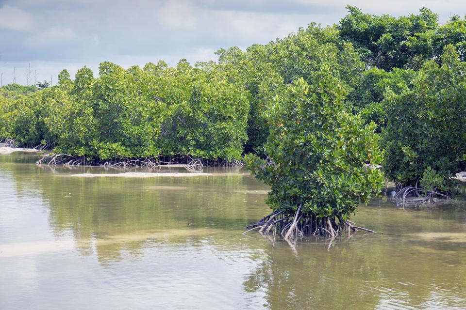 Pointe D'Esny Wetland, Mauritius