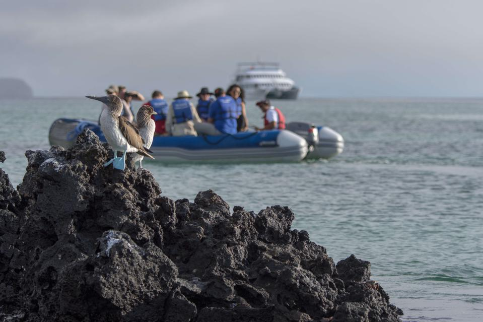 Tourists on a zodiac excursion photographing blue-footed...