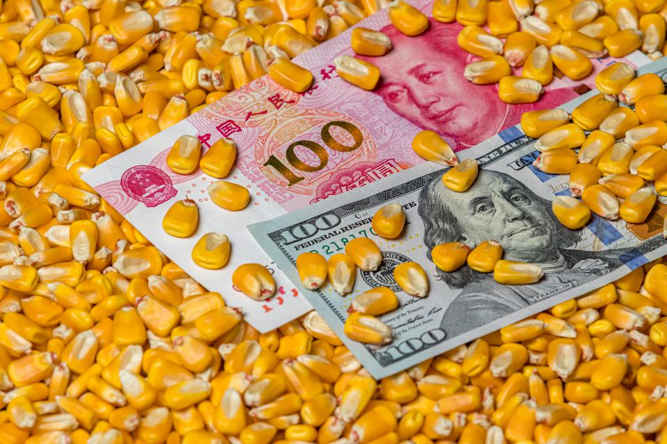 Chinese 100 yuan renminbi and American 100 dollar bill surrounded with corn kernels. Concept of China and United States of America tariffs, trade war, and commodity prices