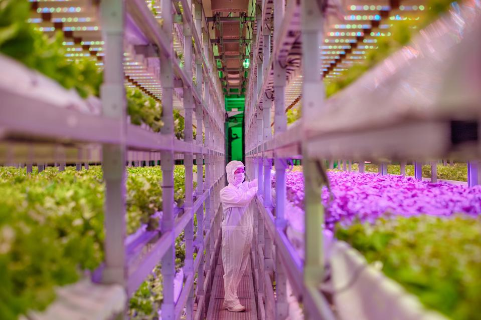 Plenty and vertical farm and Albertsons