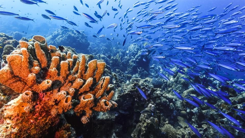 Seascape of coral reef with sponge and school of fish