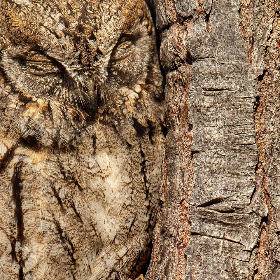An awful perfectly camouflaged in a tree trunk.