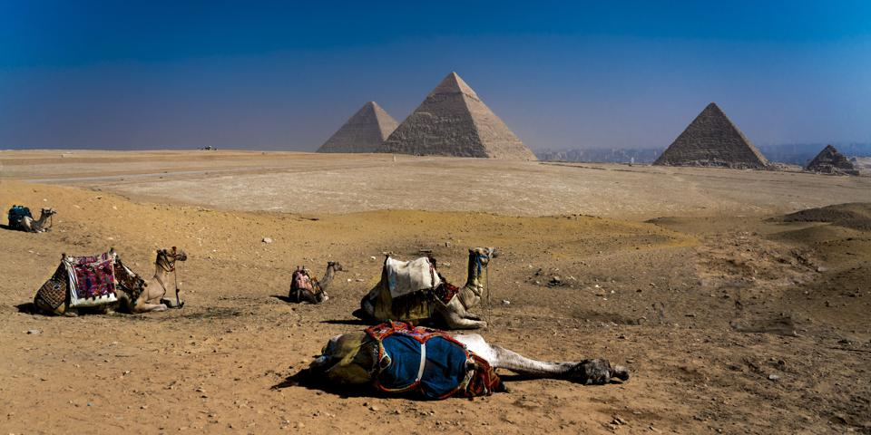 Camel in front of Great Pyramids of Giza, Cairo, Egypt
