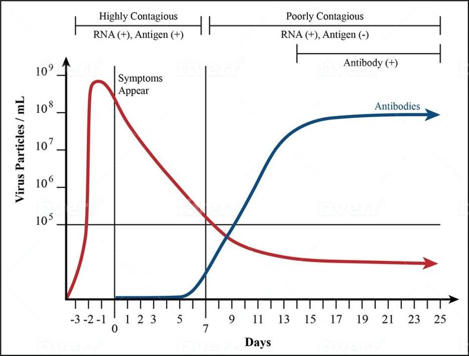 FIGURE 1. Studies show that the concentration of the Covid-19 virus in our nasal passages and throat is at its highest from the day before we develop symptoms to seven days after. This is when we're m
