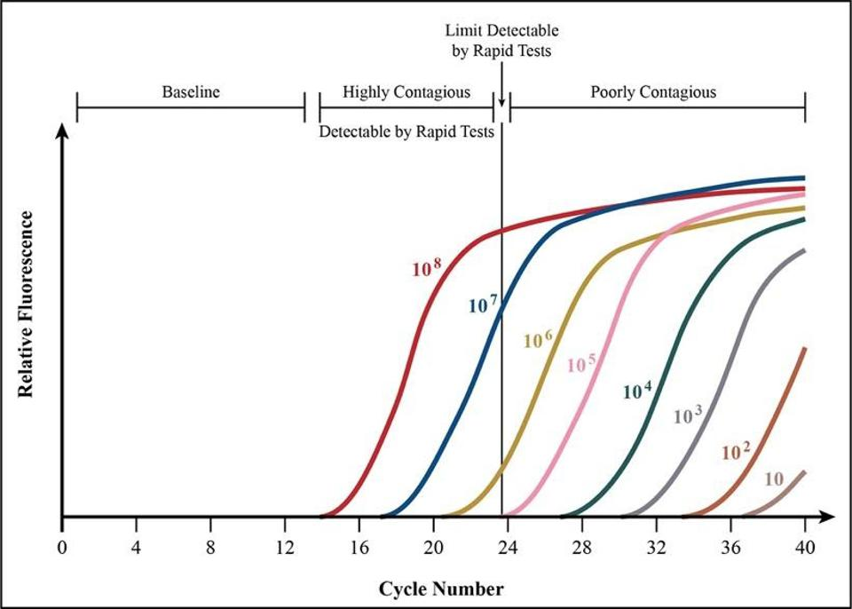FIGURE 3. Data on PCR cycle times offers more evidence that testing earlier in the disease course might intercept contagion at its most infectious.