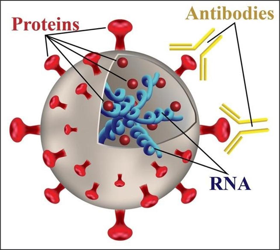 FIGURE 4. A model of a virus.