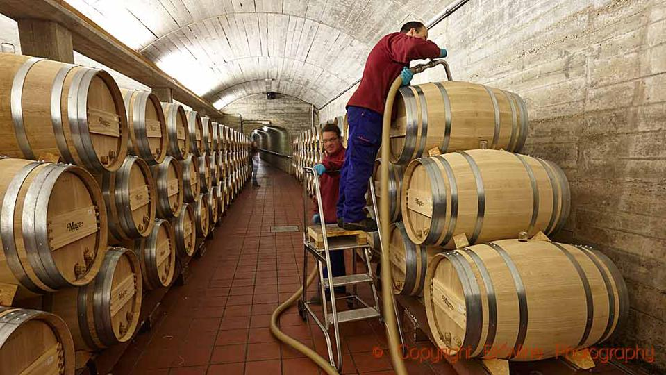 Topping up oak barrels in the cellar of Bodegas Muga in Haro, Rioja, Spain