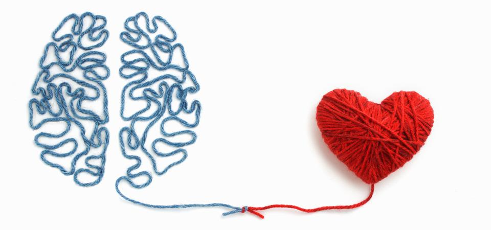 Heart and brain connected by a knot on a white background