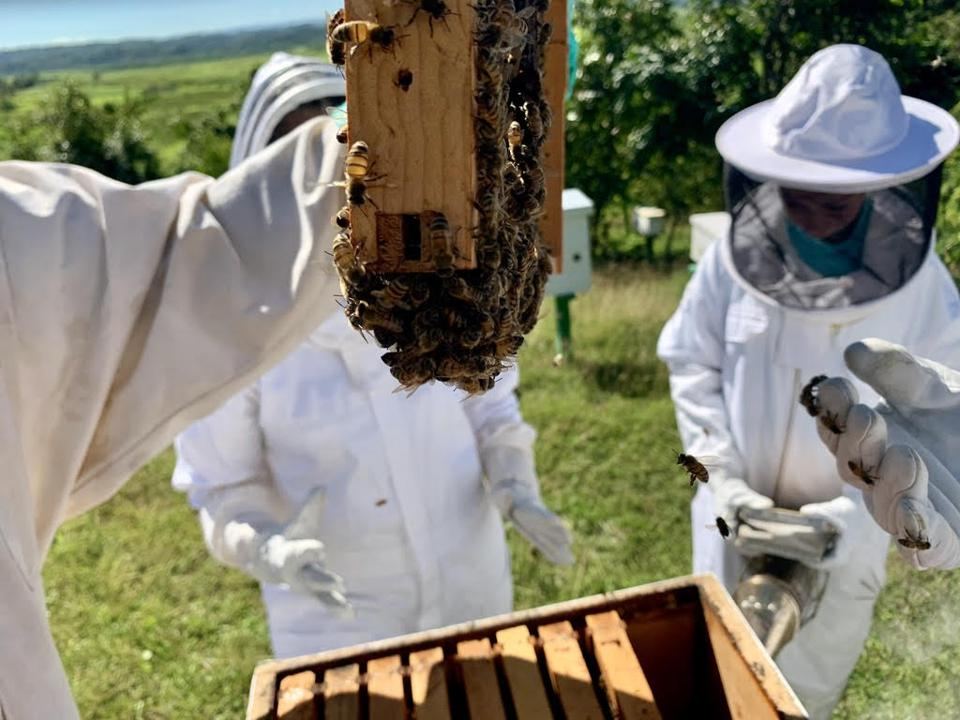 Honey bee education facilitated by the Be a Bee initiative