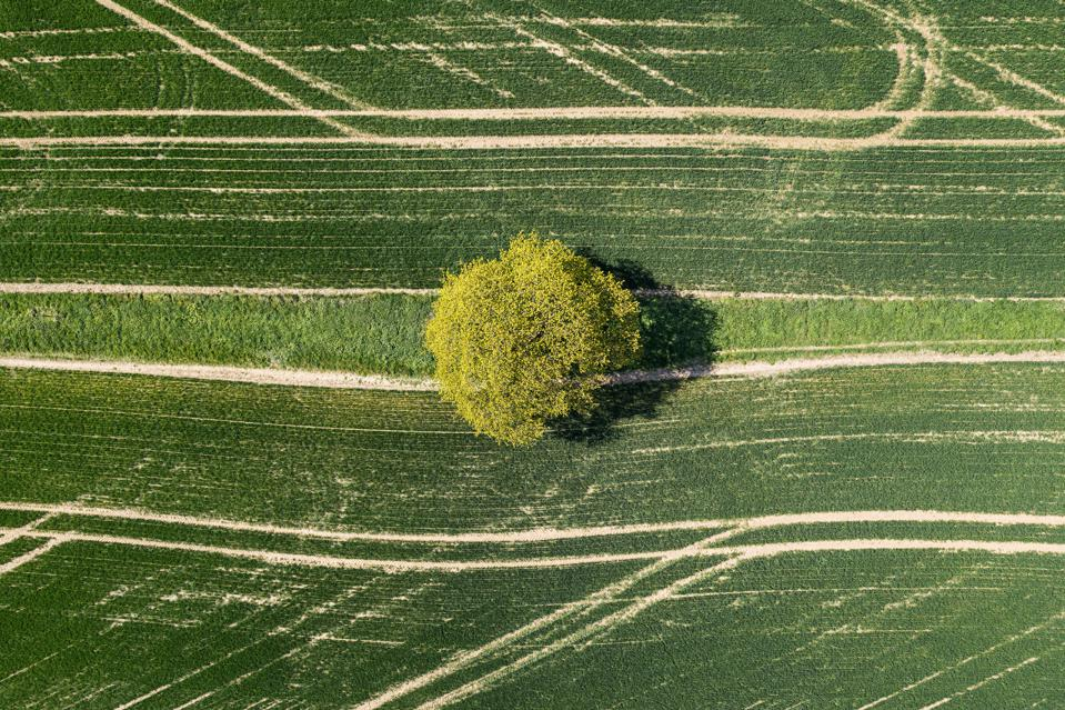 Drone view of tree in field