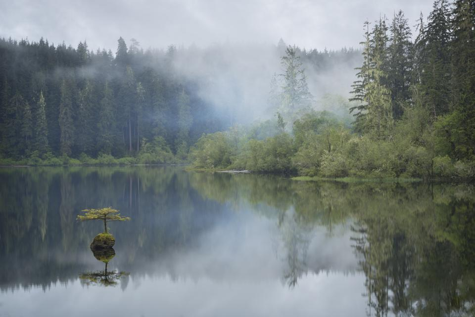 Misty forest scene at Fairy Lake, Port Renfrew, Vancouver Island, British Columbia, Canada