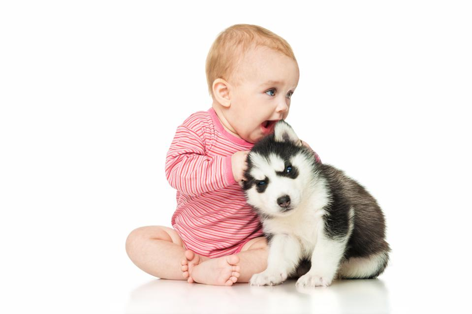 Little girl playing with a puppy husky