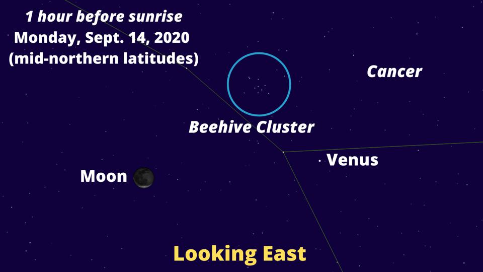 A bright Venus, a 13%-illuminated Moon and the Beehive Cluster (M44) will form a triangle.