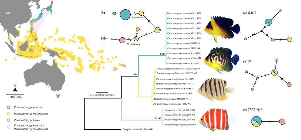 Figure 2 doi:10.1098/rspb.2020.1459
