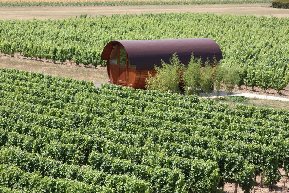 wine barrel in a vineyard