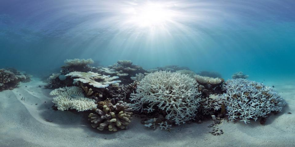 A bleached coral reef in the Maldives