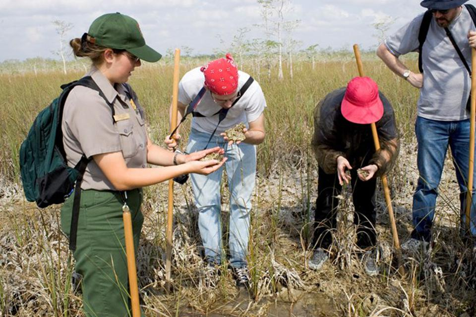 People exploring the wetlands at Everglades National Park.