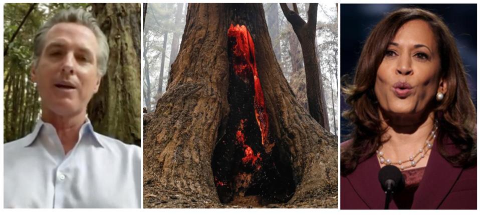 Governor Gavin Newsom, a redwood tree on fire, and Senator Kamala harris