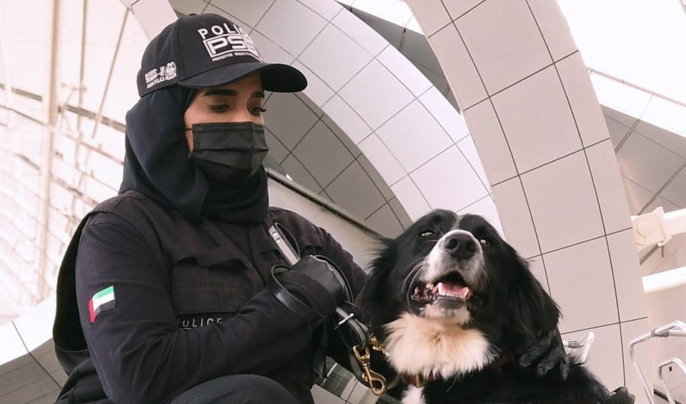 Are Sniffer Dogs The Answer To Travel Bans?
