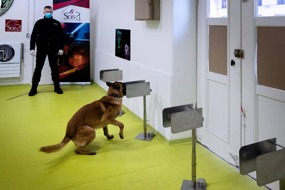 A policeman teaches his dog to find a piece of fabric that had contact with  the Covid-19 virus in Paris, France.