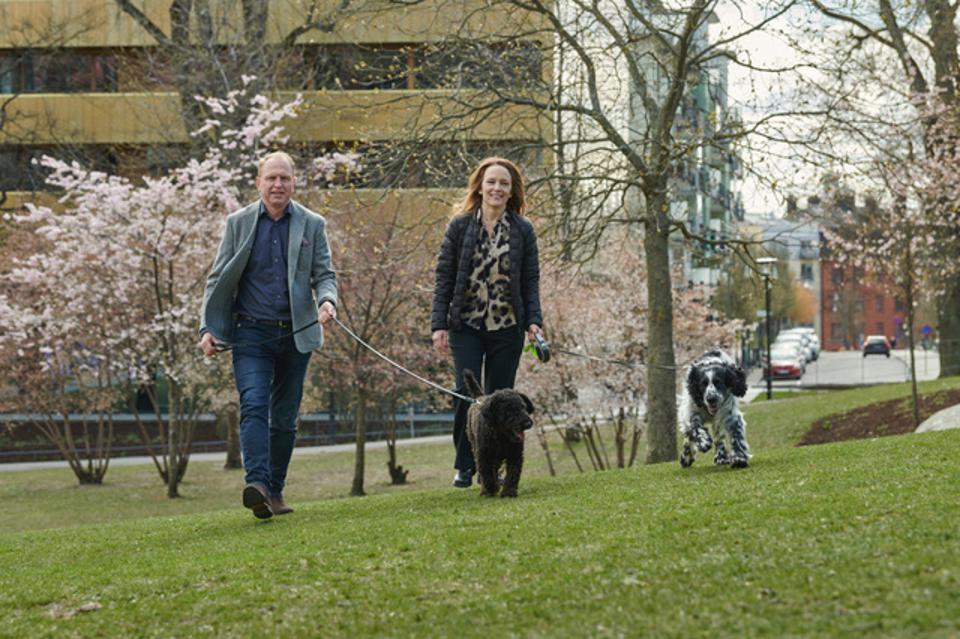 A man and a woman walking on grass in an urban park. and smiling, each holding a dog on a leash. Behind them are a few small trees with pink blossoms and a few taller trees without leaves. A street runs along the park behind the couple. On the far side of the street are buildings and parked cars.