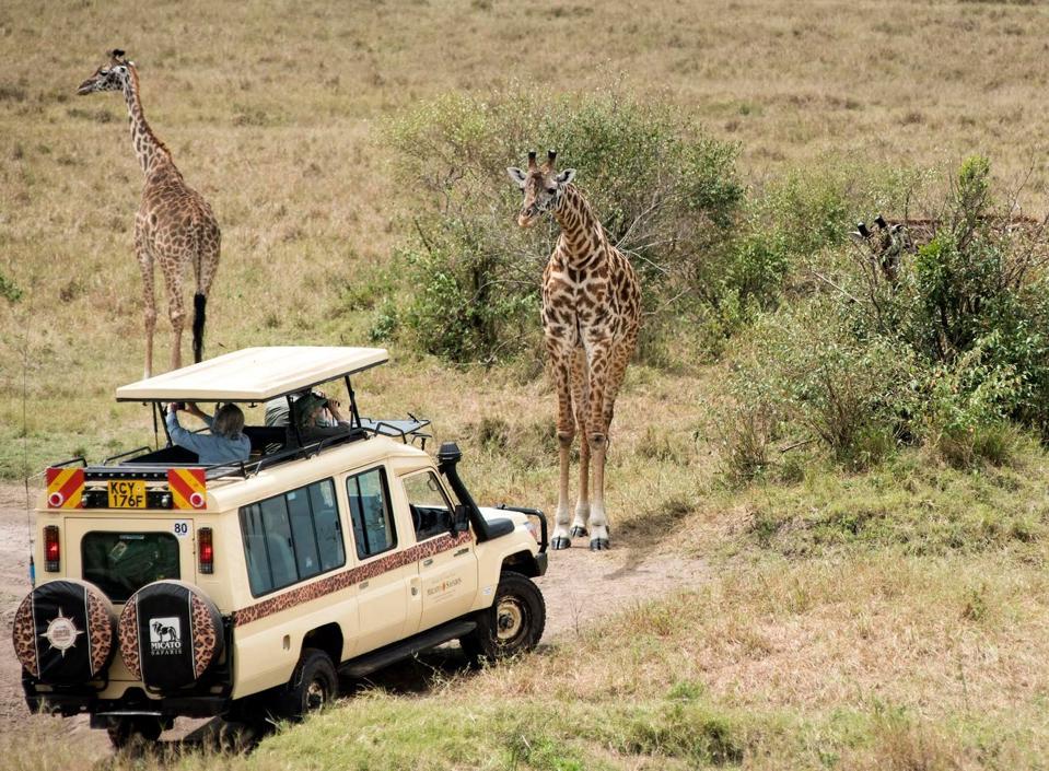 game drive on safari